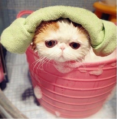 猫洗浴.jpg
