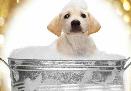 狗狗洗浴.jpg